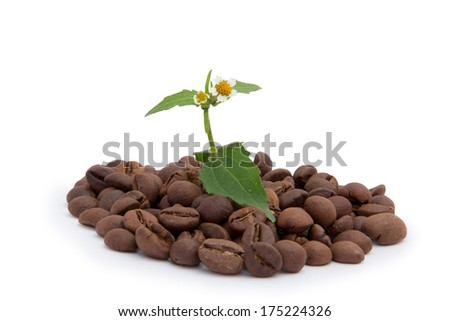 wildflower in the heap coffee granules isolated  - stock photo