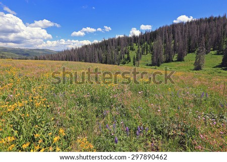 Wildflower meadow in the Utah mountains, USA. - stock photo