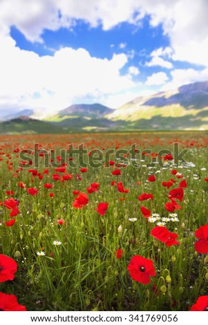 Wildflower meadows in Castelluccio, Perugia, Umbria, Northern Italy - stock photo