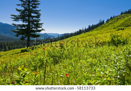 Wildflower ski slope in the summer in Washington state at Snoqualmie Pass on a beautiful sunny day.