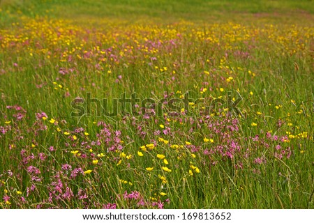 Wildflowers and meadow in Clare in Ireland Europe - stock photo