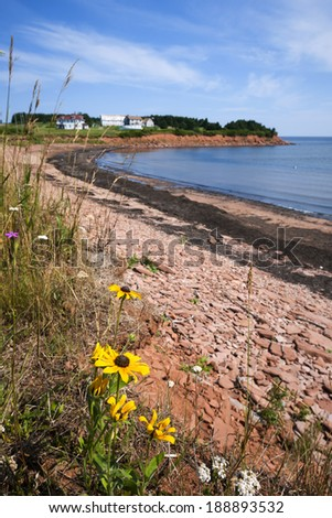 Wildflowers and red rocks on Prince Edward Island coast near village of North Rustico in Green Gables Shore, PEI, Canada. - stock photo