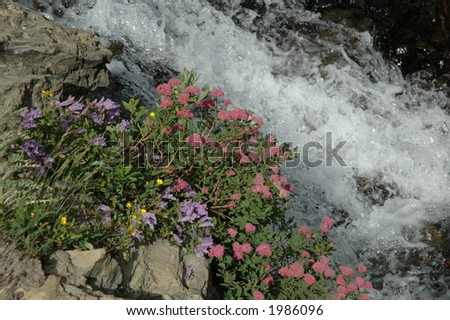 Wildflowers beside the raging water - stock photo