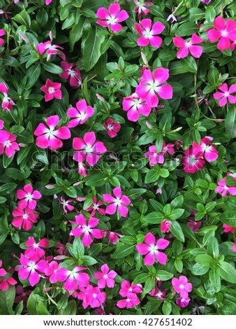 Wildflowers bushes are blooming in the spring - stock photo