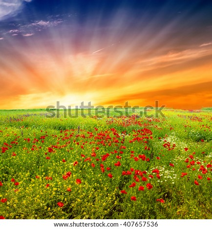 Wildflowers field - stock photo