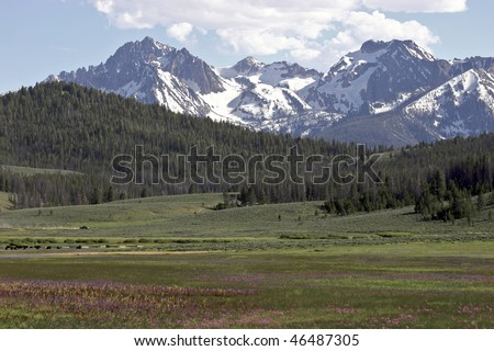 Wildflowers in a mountain valley, Idaho. - stock photo
