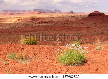 Wildflowers in the southern Utah desert, USA. - stock photo
