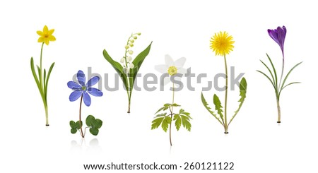Wildflowers isolated on white background with leaves - stock photo
