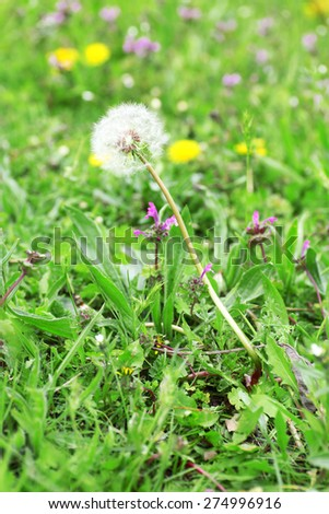 Wildflowers over green grass background - stock photo