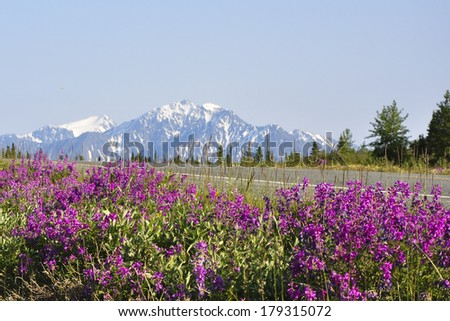 wildflowers to mountain highway - stock photo