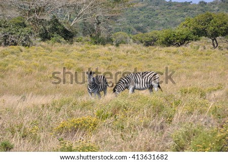 Wildlife at the Isimangaliso wetland park, St Lucia, South Africa - stock photo