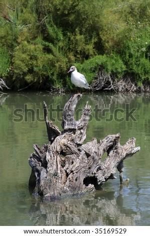 Wildlife: bird in Camargue - stock photo