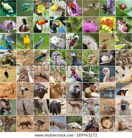 Wildlife collage  - stock photo
