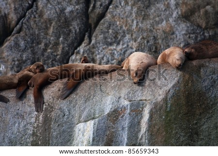 Wildlife Cruise around Resurrection Bay and  Holgate Glacier from Seward Alaska USA - stock photo