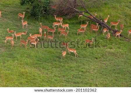 Wildlife in their natural habitat in Kenya - stock photo