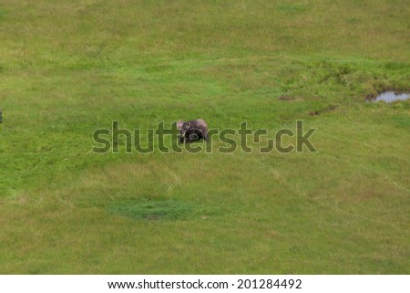 Wildlife in their natural habitat in Kenya - stock photo