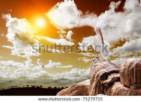 wildlife.Landscape and pelican - stock photo