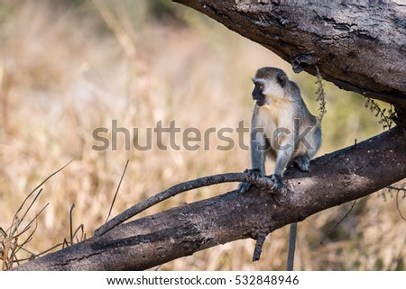 Wildlife Photographs in Ruaha Tanzania while on Safari in Africa, Tanzania