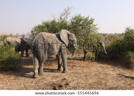 Wildlife Photography Large African Elephant in Bush
