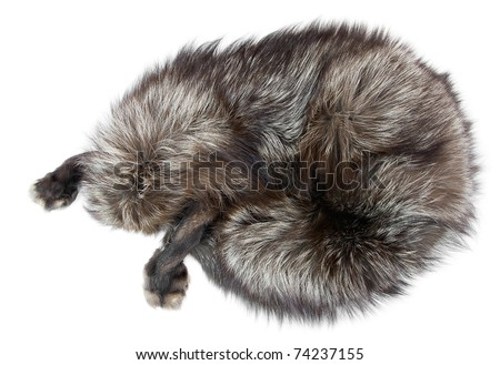 Wildlife protection. Silver fox  pelt in the form of an animal. Object over white