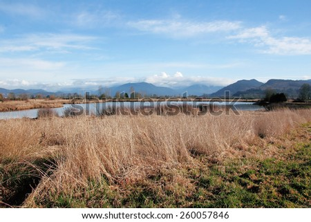 Willband Creek Park in British Columbia's Fraser Valley is a man made sanctuary for bird/Man Made Nature Park/Willband Creek Park in British Columbia's Fraser Valley is a man made sanctuary for birds. - stock photo