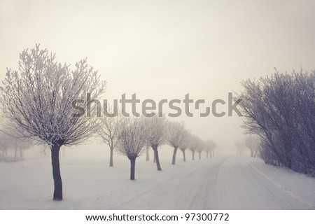 Willow at winter - stock photo