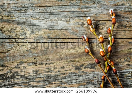 Willow branches with catkins on an old vintage wood from above. Easter background layout with free text space. - stock photo