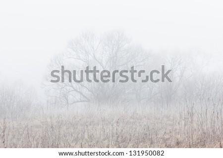 Willow in mist. Tranquil morning scene. - stock photo