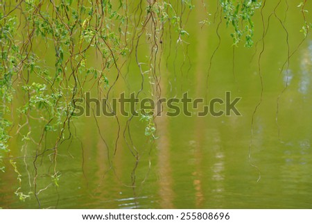 willow on the lake, natural background with reflection in water - stock photo