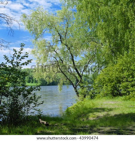 Willow on the river - stock photo