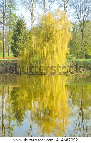 Willow on the river in the spring with filter - stock photo