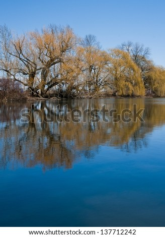 Willow's reflecting in a still pond - stock photo