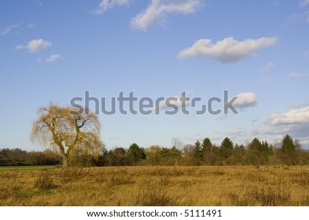 Willow tree in the wind. - stock photo