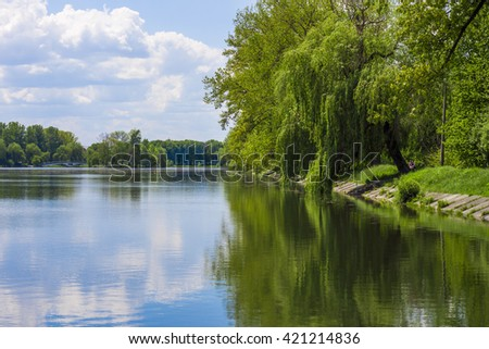 Willow trees leaning over the lake in  sunny day