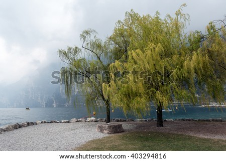 Willow Trees on the Shore at Riva del Garda