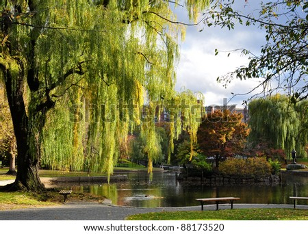 willows and pond in peaceful Boston Central Park in autumn - stock photo