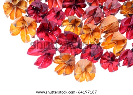 Wilted plant - stock photo