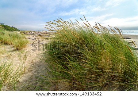 Wind blowing through grass at the Oregon coast - stock photo