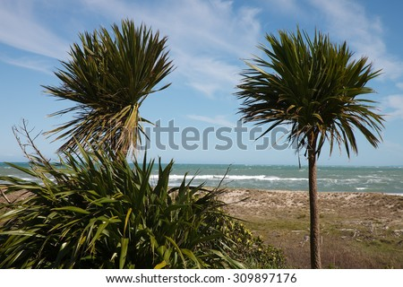 wind blown cabbage trees or ti with flax bush and a surf beach in the background  - stock photo
