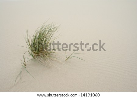 Wind blown grass on sand dune. - stock photo
