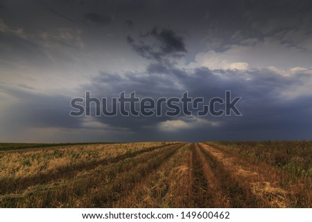 Wind blown rural fields and storm clouds in summer