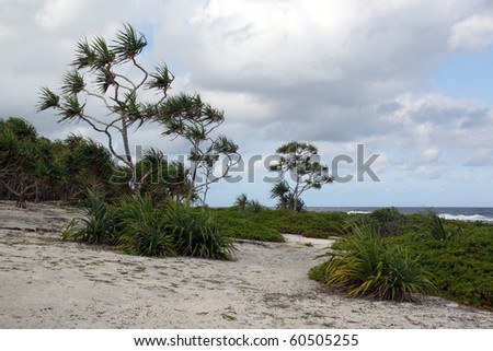 Wind, cloud and trees on the beach in Efate, Vanuatu