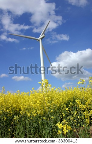 Wind engine in rapeseed field - stock photo