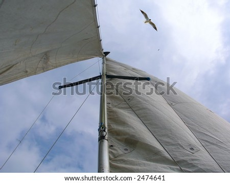 Wind in my sails - stock photo