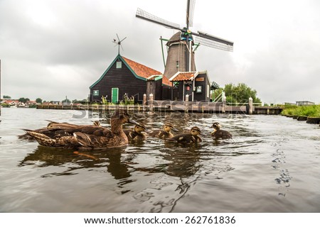 Wind mills and ducks in Zaanse Schans, Netherland. Holland - stock photo