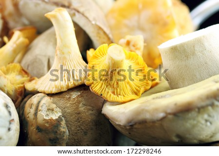 wind mushrooms, porcini and Chanterelle