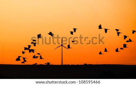 Wind turbine with  Black Cockatoo's in flight at sunset, Australia - stock photo