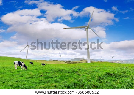 Wind Turbines and Cows on Green Meadow.