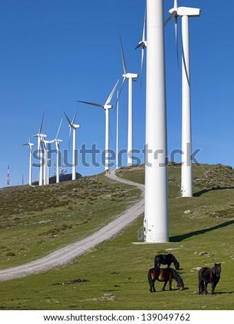 wind turbines and horses - stock photo