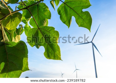 wind turbines and leave - stock photo